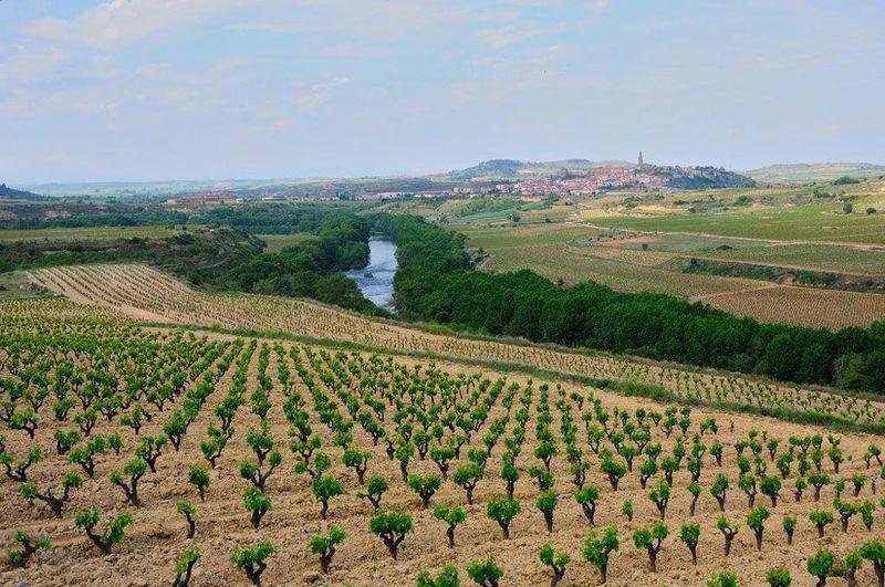 Miogusto_LopezdeHaro_Rioja